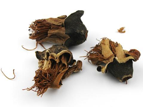 亳州市场木棉花货源充足 正常购销