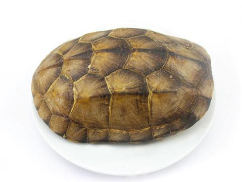 亳州市场龟甲货源充足 行情坚挺