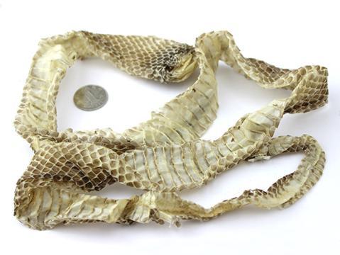 亳州市场蛇蜕货源少 行情上涨